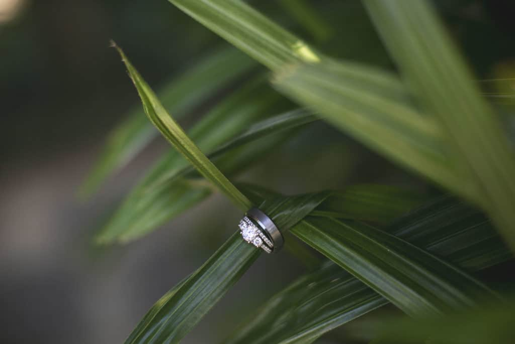 Wedding Rings on a Palm Frond