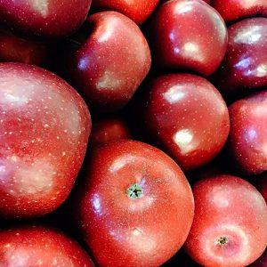 north carolina apples