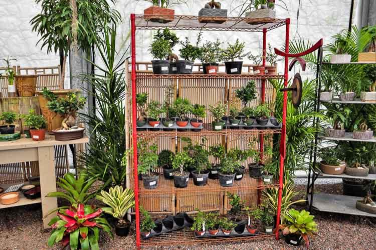 bonsai rockledge gardens